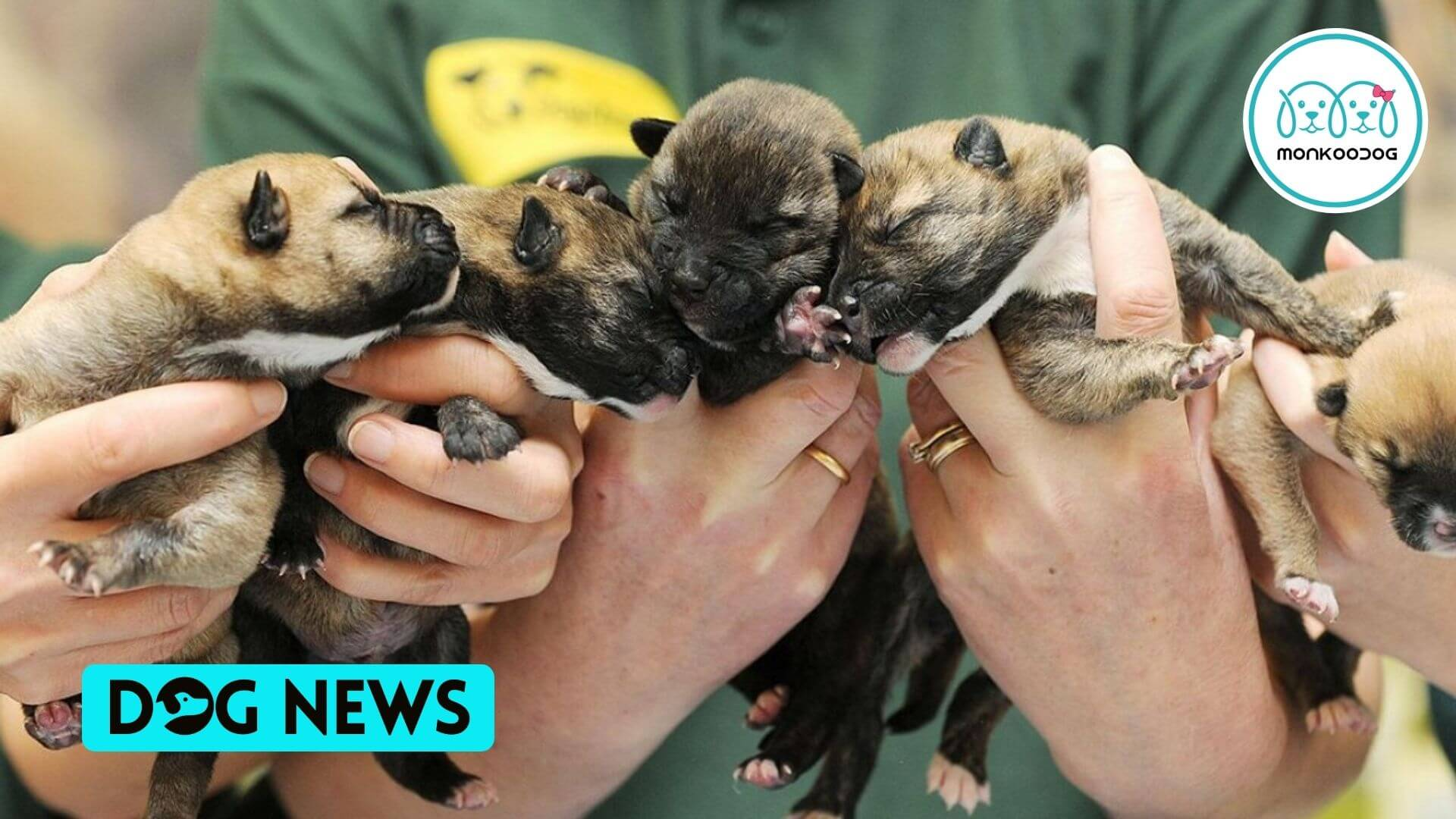 Government Introduces New Rules to crack down on puppy smuggling and safeguard dog welfare.