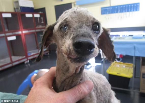 Horrific Treatment of Pet Dog 2