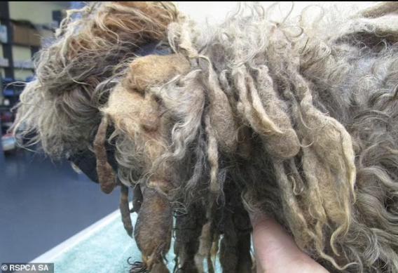 Horrific Treatment of Pet Dog 3