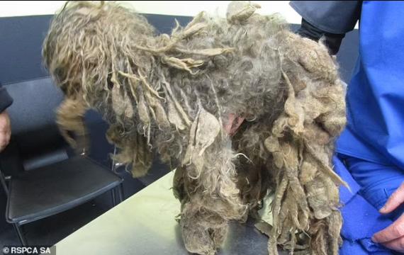 Horrific Treatment of Pet Dog