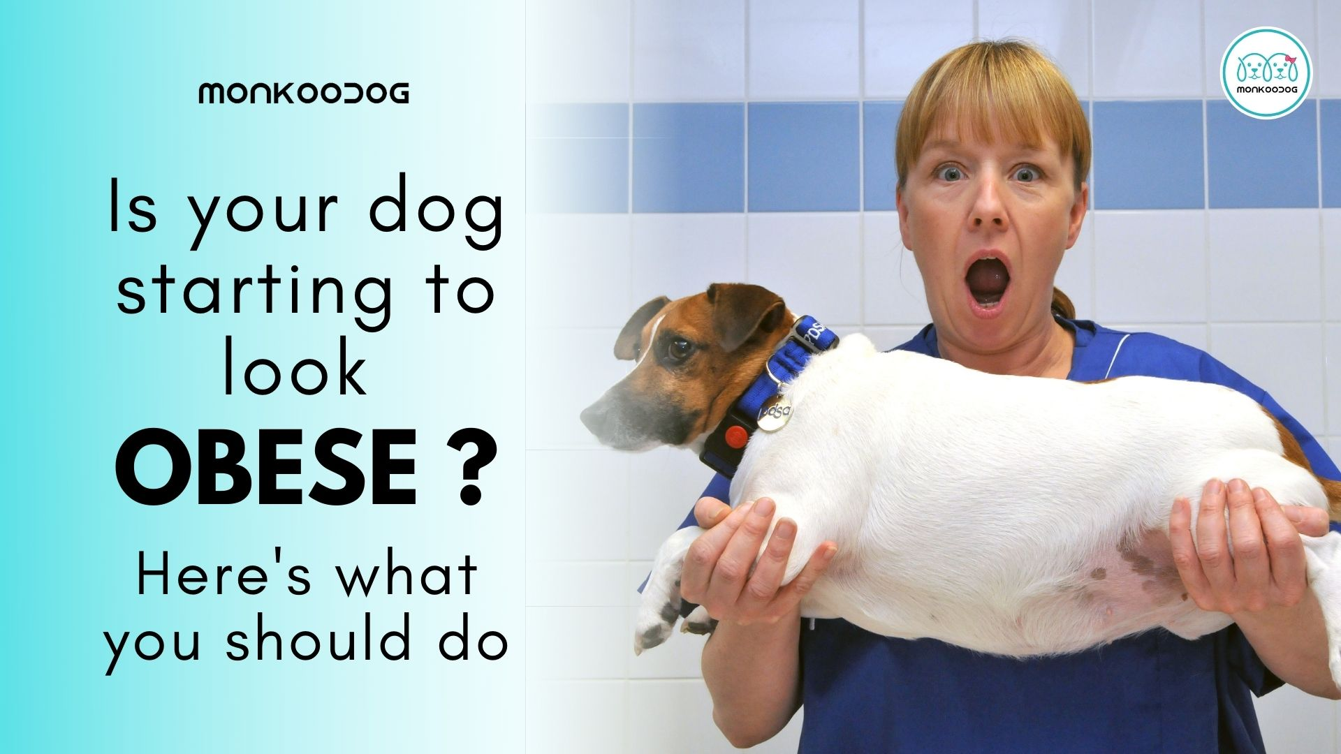 Is your dog starting to look obese? Here's what to do by Monkoodog
