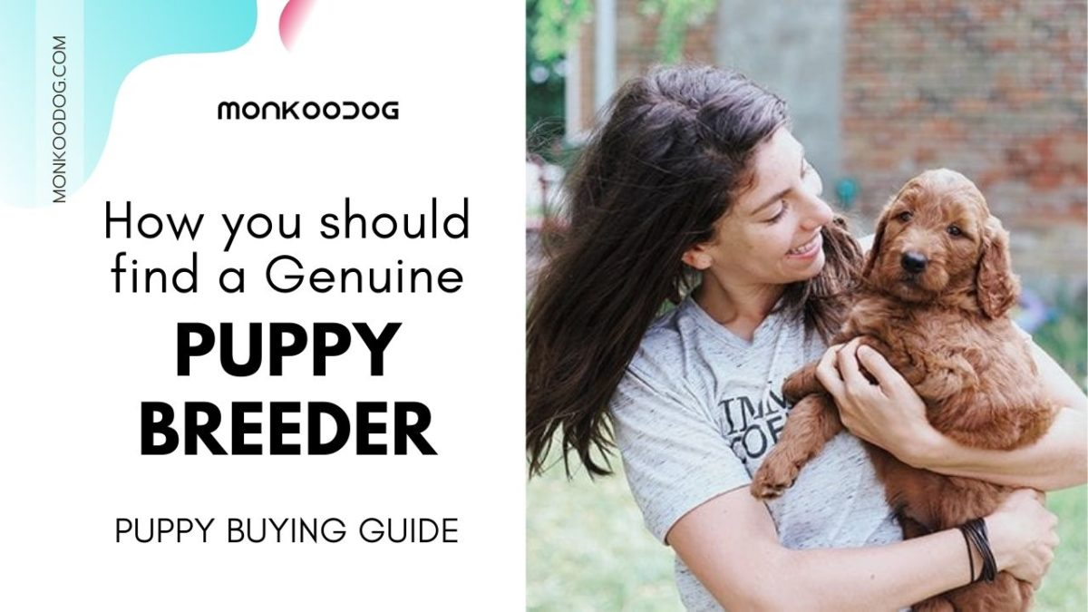 Puppy Buying Guide, Finding The Right Breeder