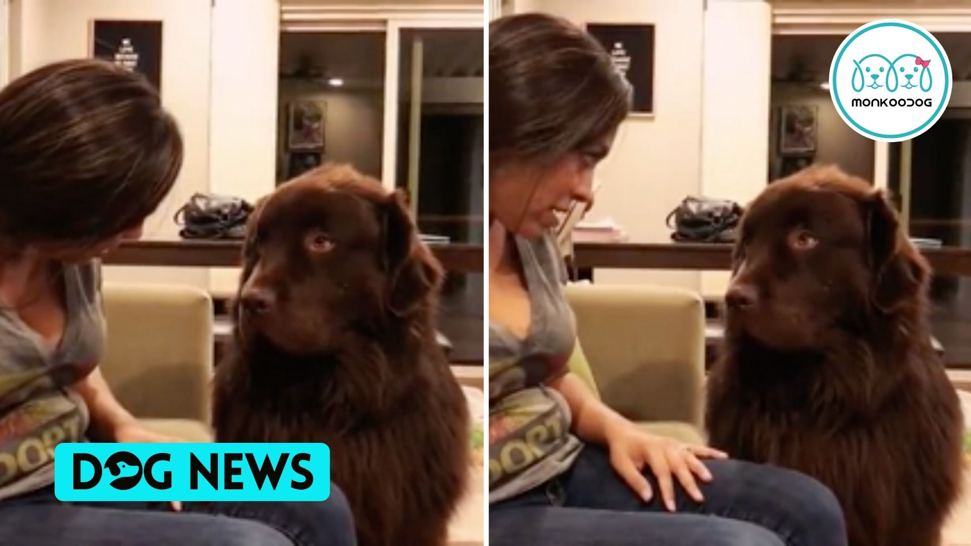 The Big Fur Ball is up to some 'DRAMA'. Check out the adorable video!!