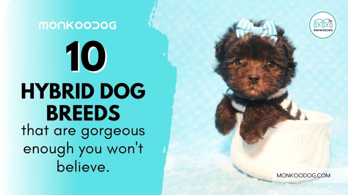 Top 10 Hybrid Breeds – Gorgeous Cross-Breed You Won't Believe