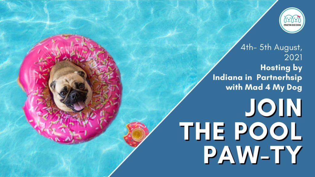 Upcoming Dog Event Get ready for a Dive into pool paw-ty!!