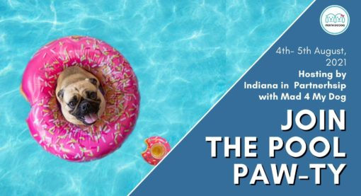 Upcoming Dog Event: Get ready for a Dive into the pool paw-ty