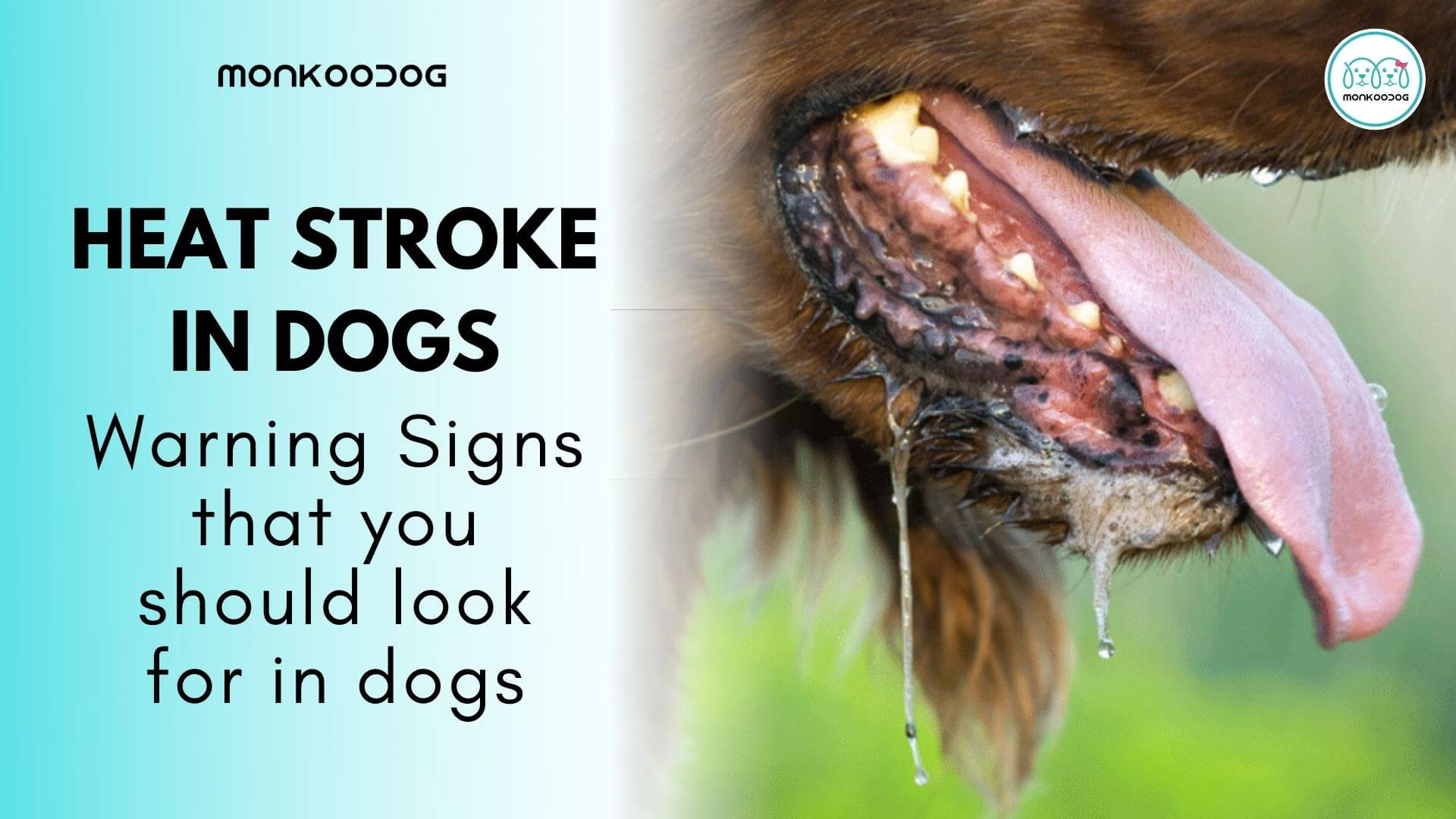 Warning Signs Your Dog Is Suffering from Heat Stroke