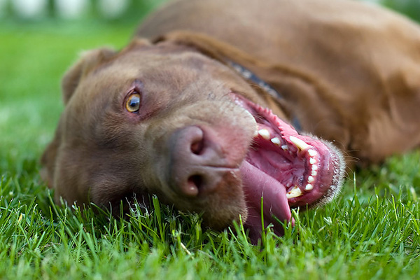 Warning Signs and Symptoms of Heat Stroke in Dogs