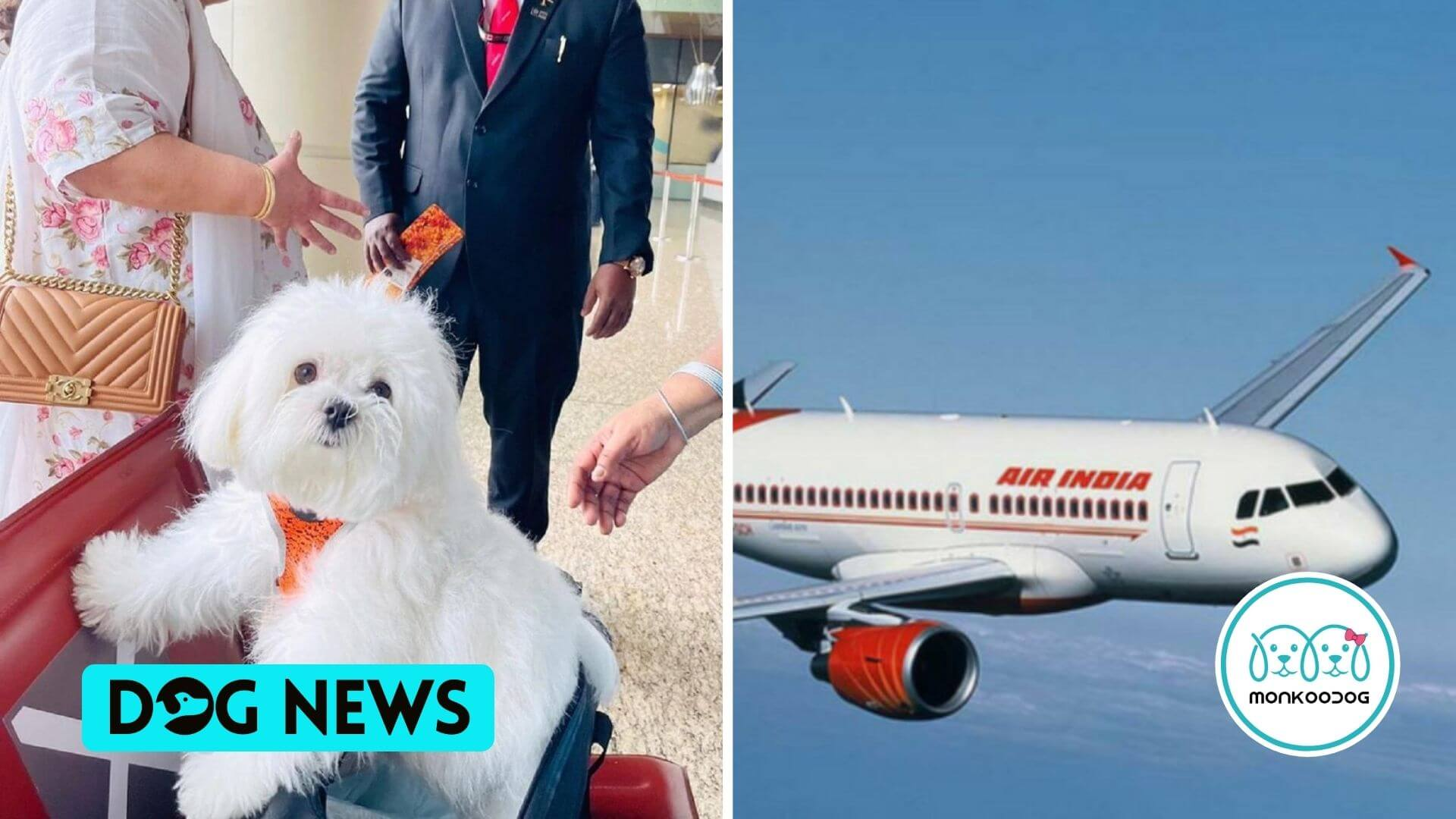Dog Owner Booked Entire Air