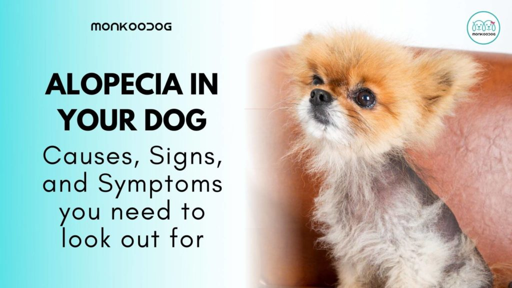 All you need to know about Alopecia in dogs