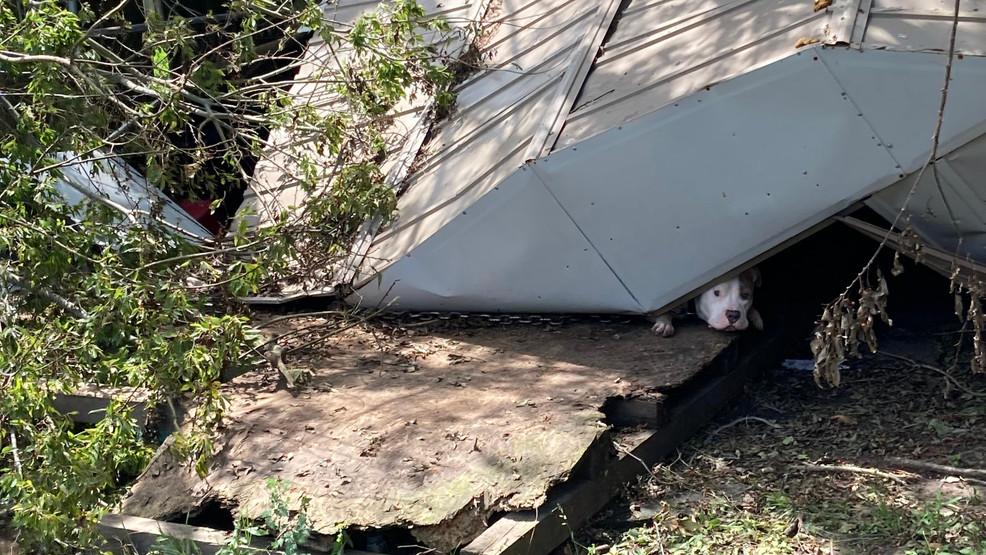 Dog Stuck Beneath Debris in Louisiana 2