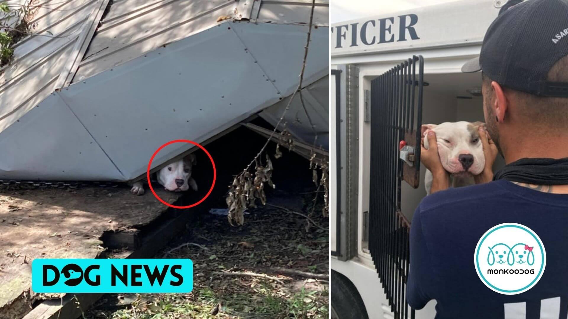 Dog Stuck Beneath Debris in Louisiana following Hurricane Ida rescued by the Humane Rescue Alliance!!