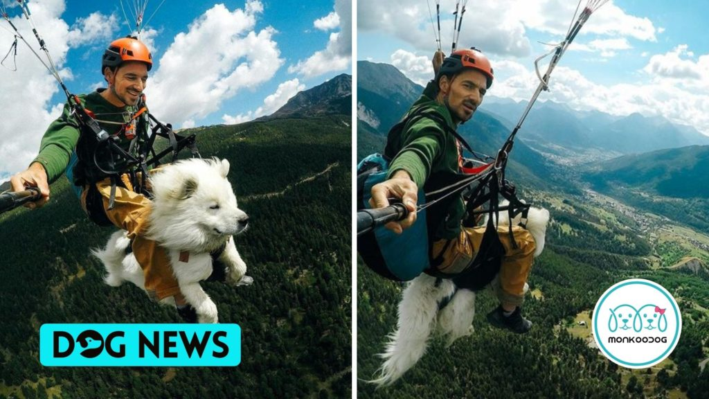 Dog on an Endearing Paragliding Journey over French slopes with his Owner. Check out the viral video.