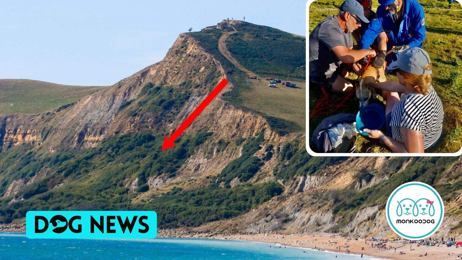 Dog, saved by coastguards, Miraculously Survives a Fall over the edge of a 515ft seaside cliff.