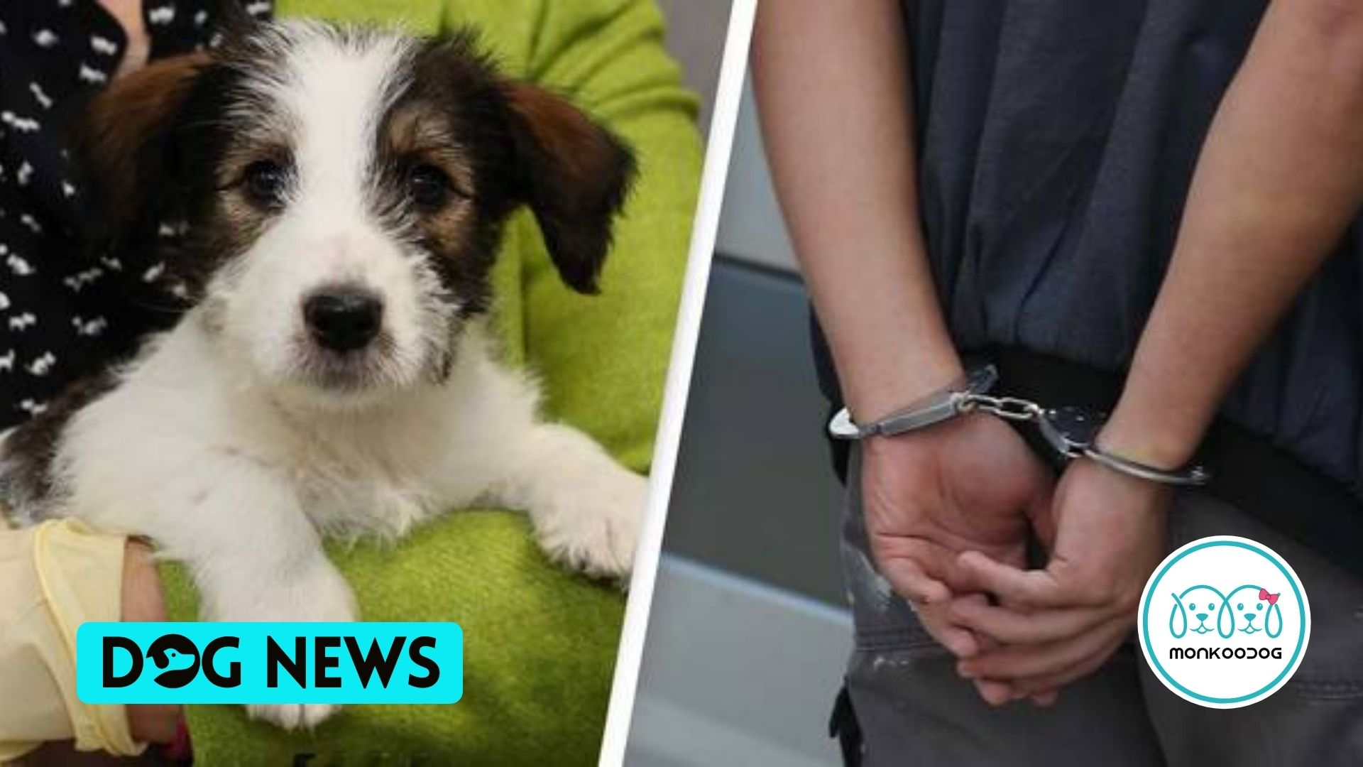 Dognappers face lengthy prison terms under laws to Protect Dogs, after incidents almost TRIPLE during Covid lockdown.