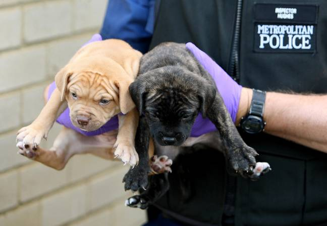 Dognappers face lengthy prison terms under laws to Protect Dogs