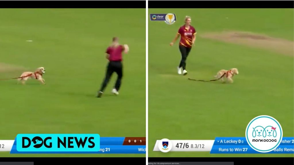 'Four-Legged Fielder' A Dog enters the Cricket Field. Catch the ball and runs away. Check out the Viral Innings!!