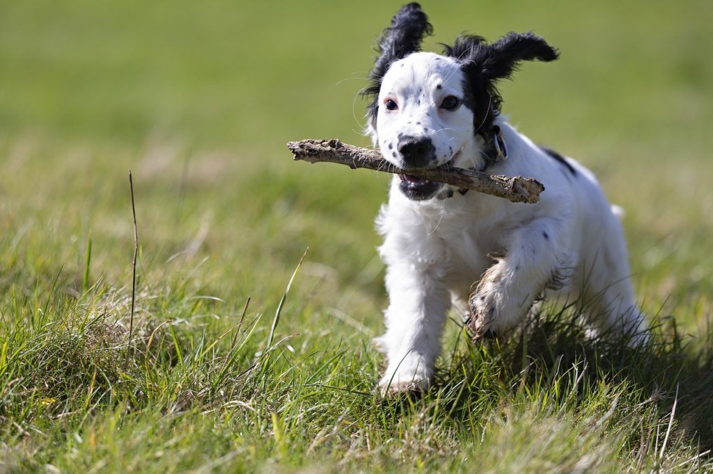 puppy-playing-with-the-stick-