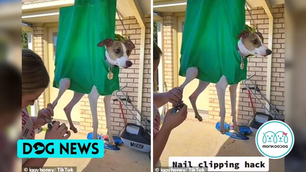 Pet Owner Reused a Bag For Clipping Its Stressed Dog's Nails. The Best Dog Grooming Trick.