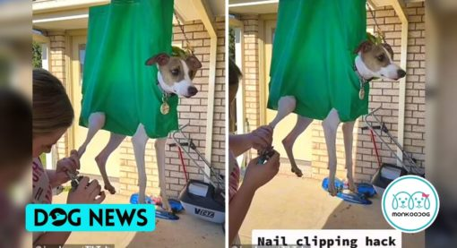 Dog Owner Reused a Bag For Clipping Its Stressed Dog's Nails. The Best Dog Grooming Trick.