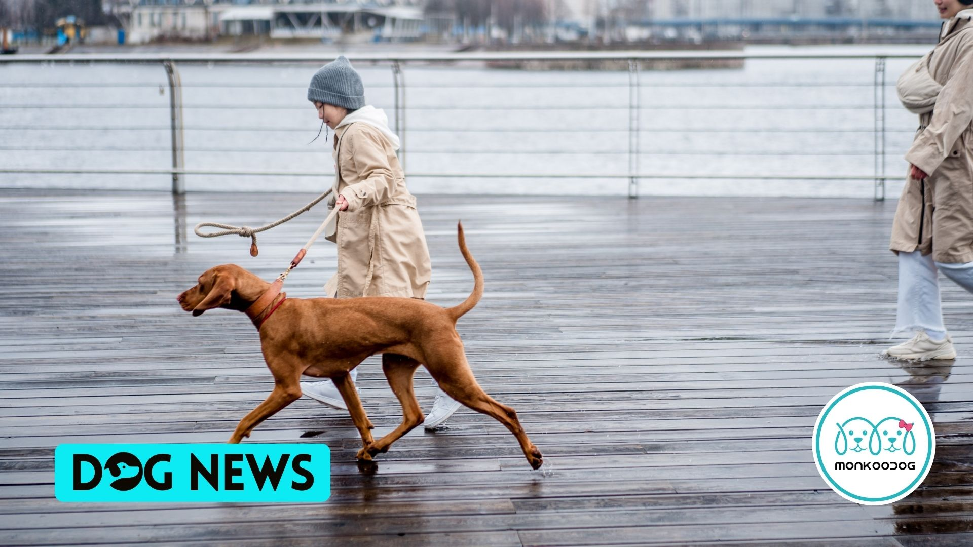 Study Shows Lots Of Dog Walks Can Prevents CDD - Canine Form Of Dementia In Dogs