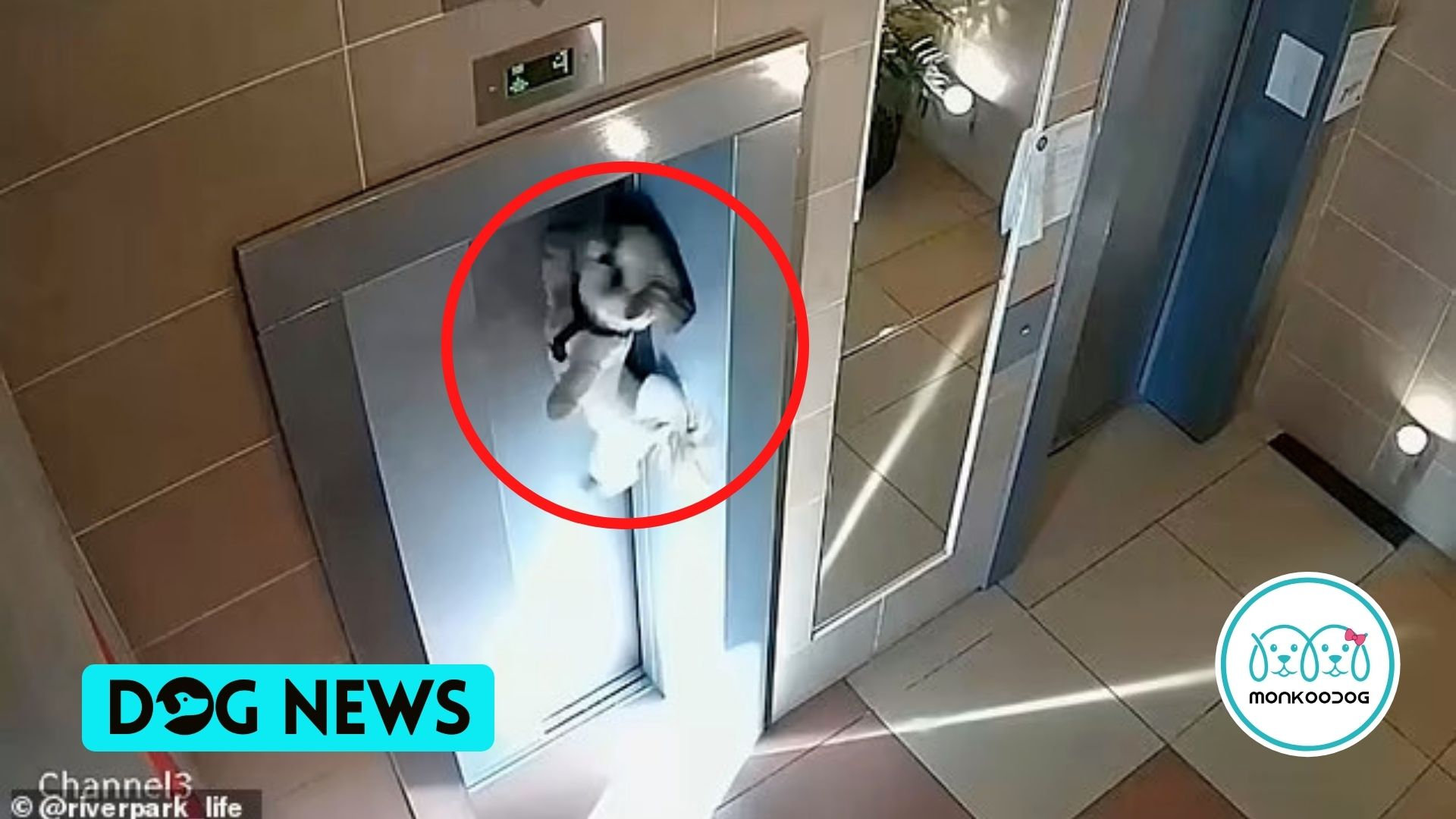 Terrified Dog Strung up in the Elevator Door by its leash. Watch the Horrifying video (2)