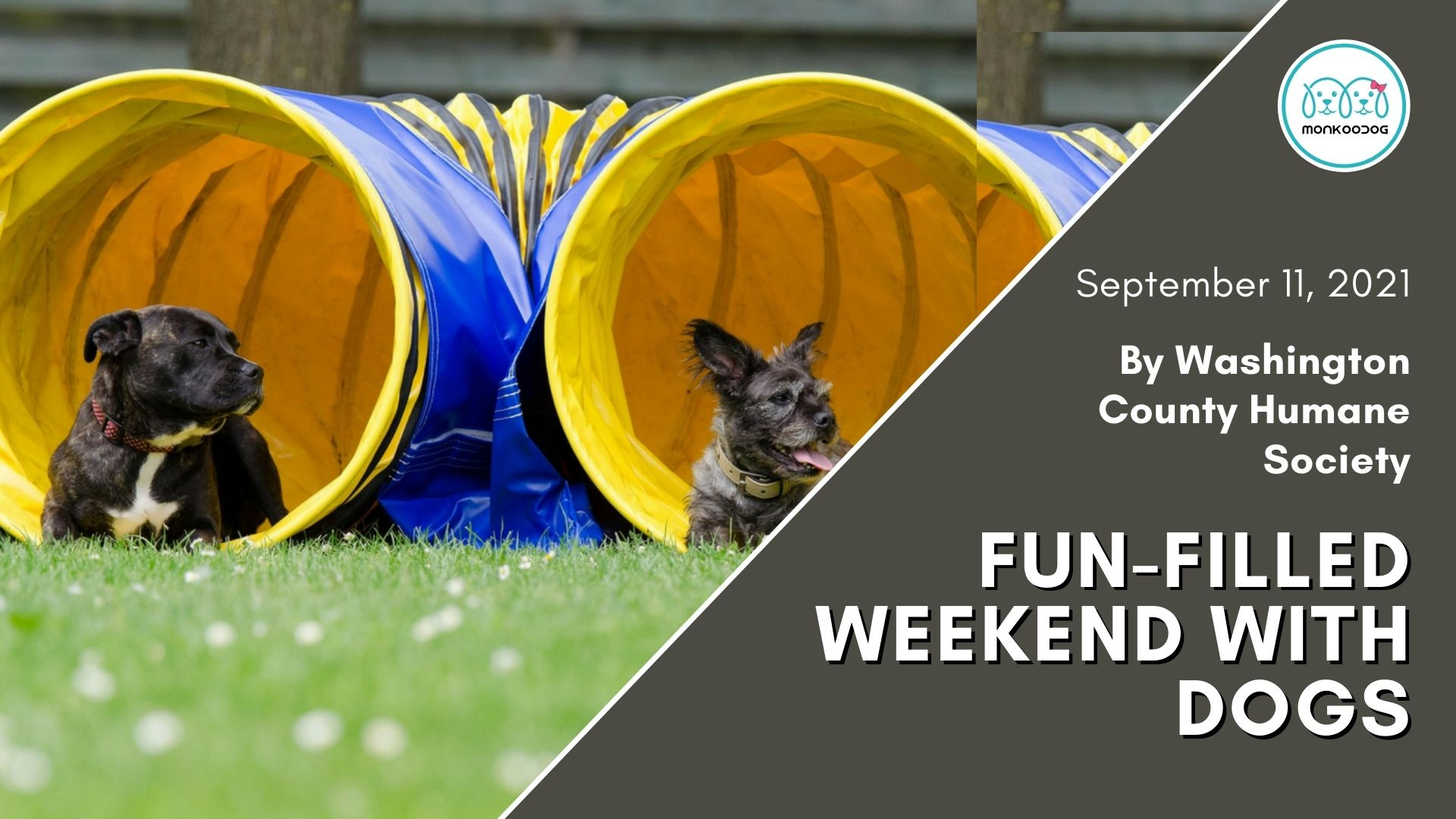 Upcoming dog events Paws in the Park Dog Walk and Fun-filled Festivities By Washington County Humane Society.