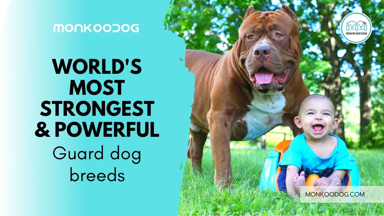Welcome to the World of 10 Strongest & Powerful Guard Dog Breeds