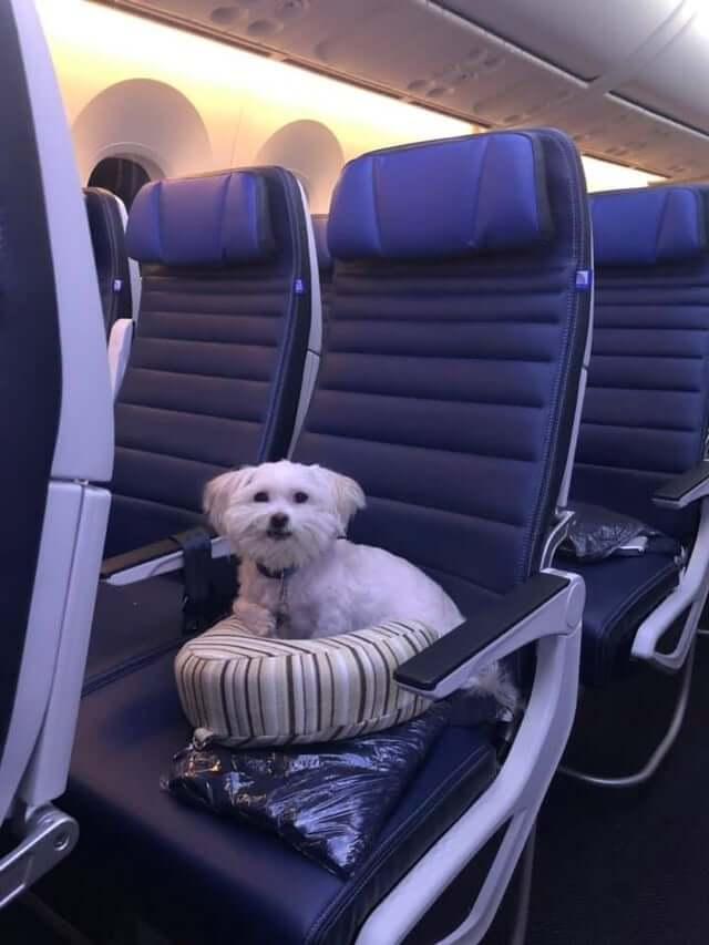 A maltese dog enjoying