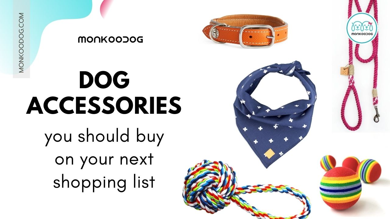 4 Essential Dog Accessories To Find On Your Next Shopping Trip