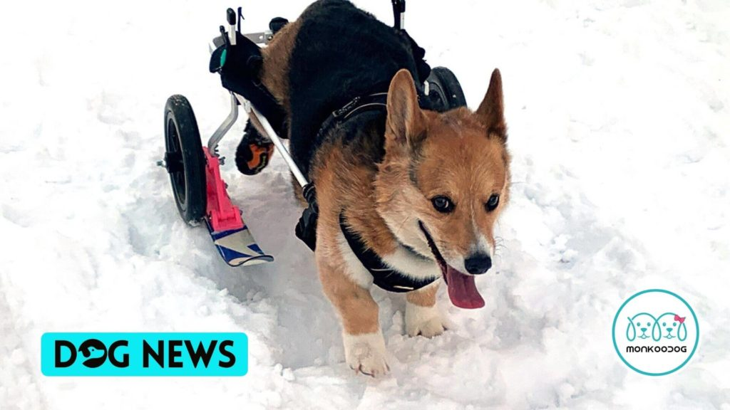 An Engineer from Nebraska Designs Skis for his Pet's