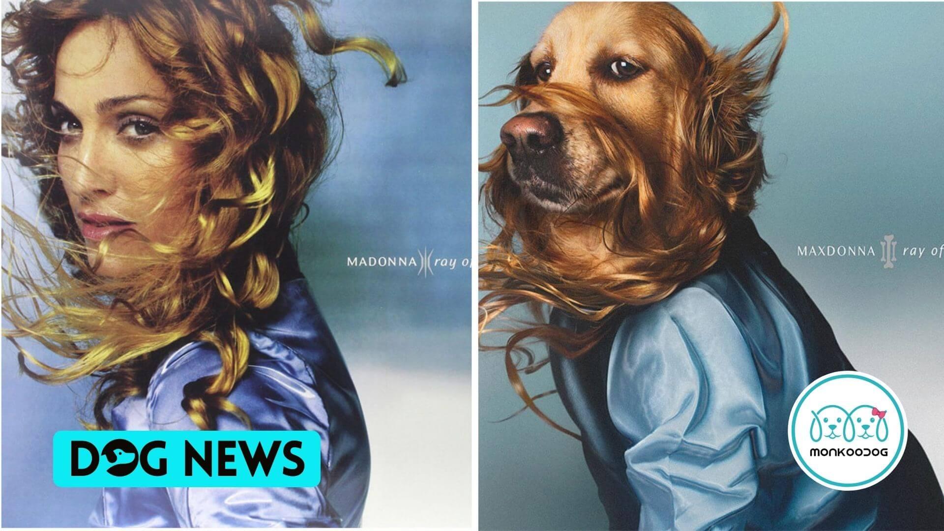 Dog recreates madonna's photos