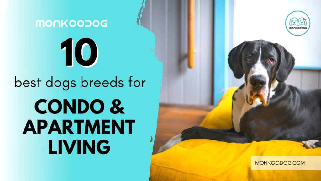 Best dog breeds for apartment