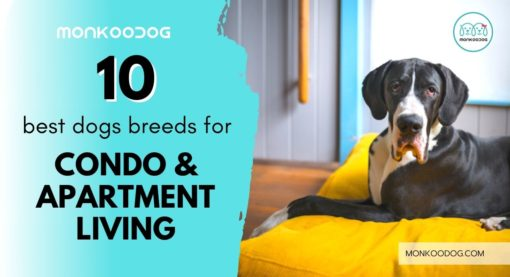 Exploring the World of Best Dog Breeds For Condo & Apartment Living.