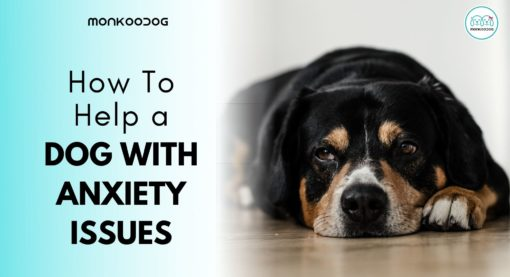 How To Help a Dog With Anxiety Issues