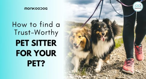 How do I Find a Trustworthy Pet Sitter?