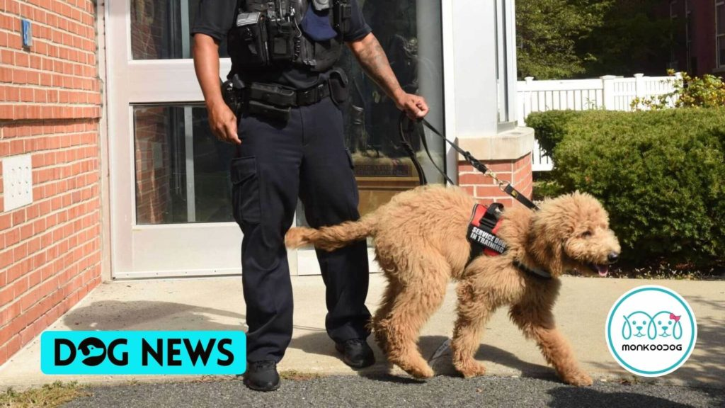 Police therapy dog saves teen