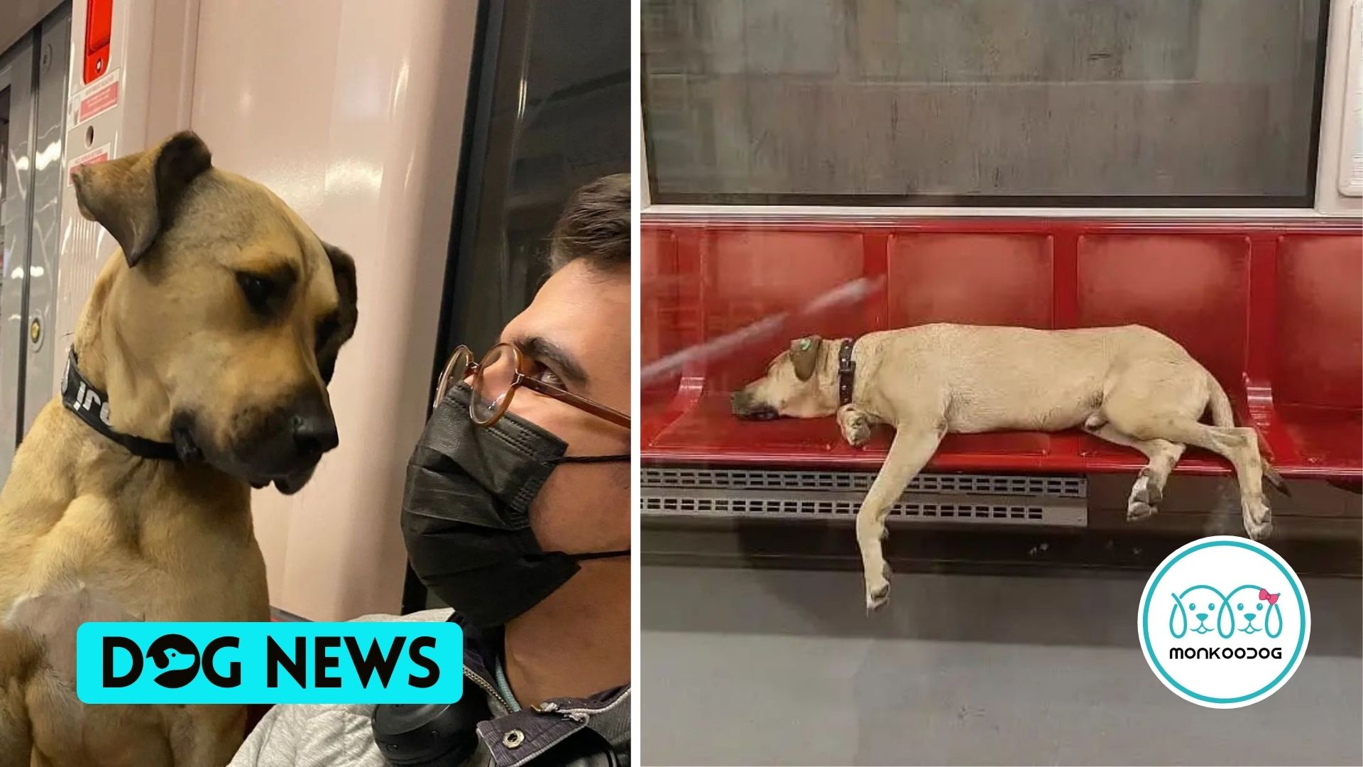 Say hello to Boji, Istanbul's adorable commuter dog that uses tram!