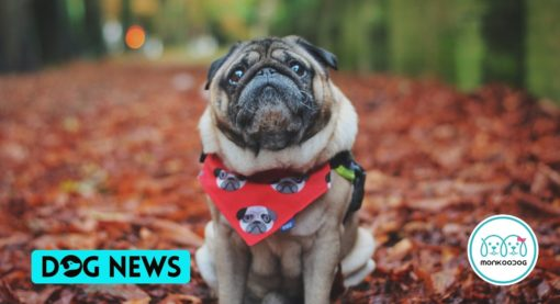 Study finds that Dogs can develop ADHD