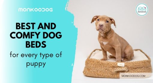 The Best And Comfy Dog Beds for Puppies