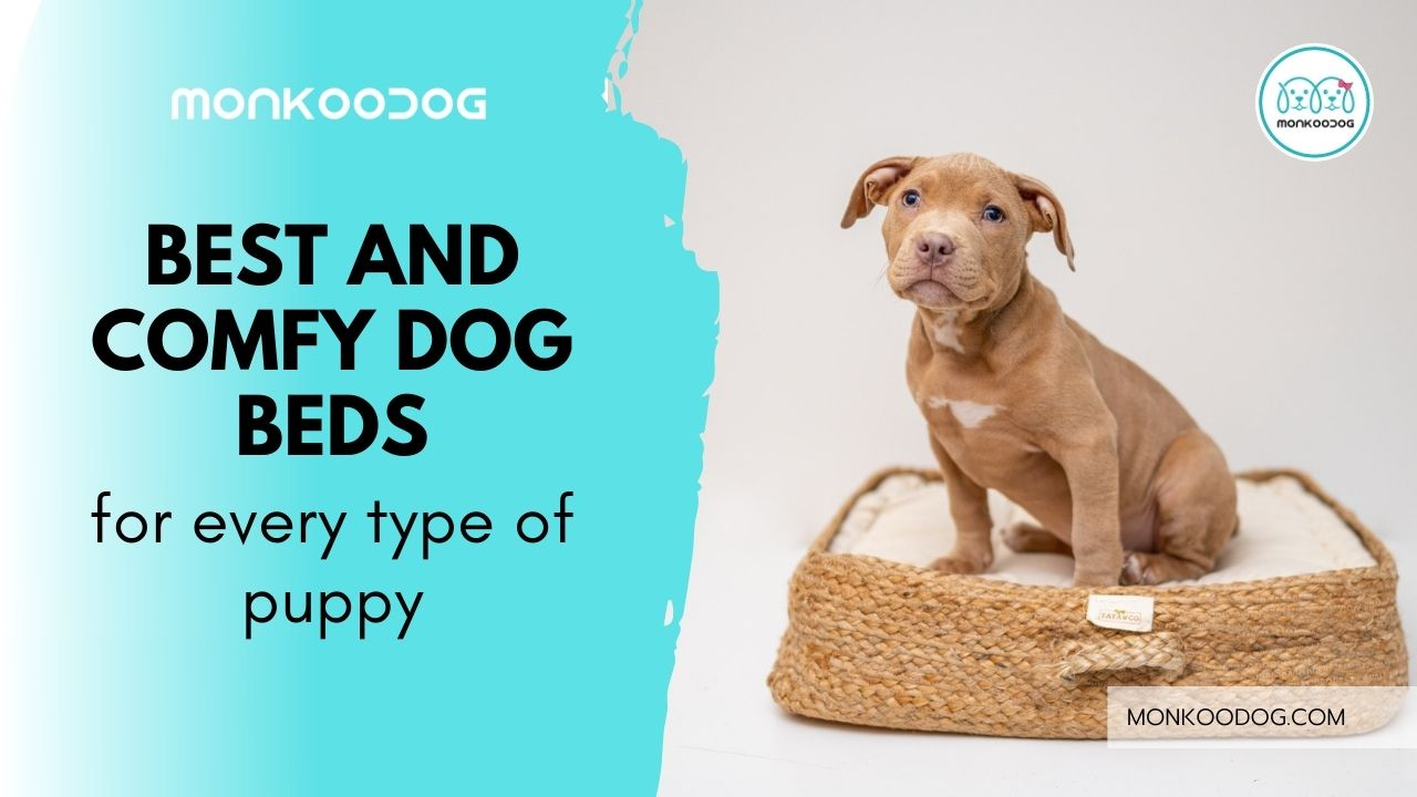dog beds for puppies