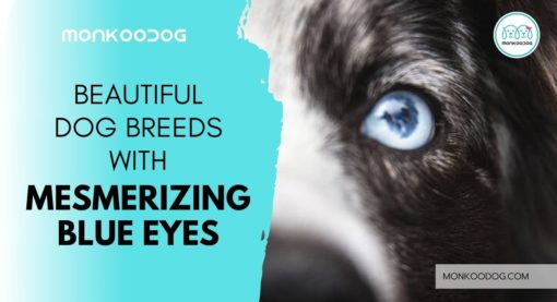 Top 12 Mesmerizing Dogs with Blue Eyes