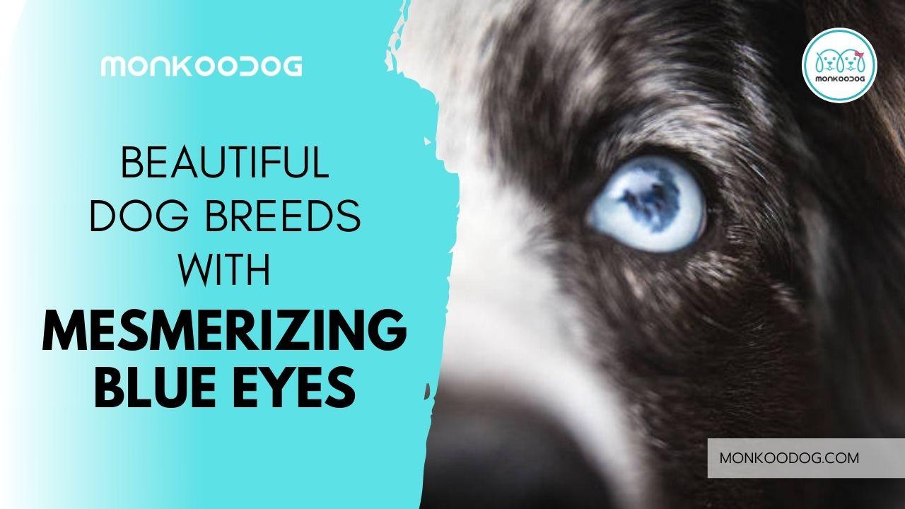 Top 12 Dog Breeds