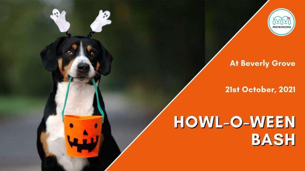 Howl-O-Ween Bash at Beverly Grove