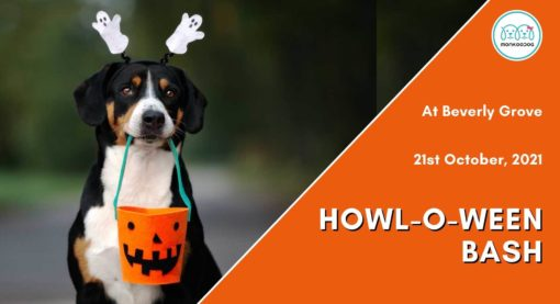 Upcoming Pet Event:  Howl-O-Ween Bash at Beverly Grove
